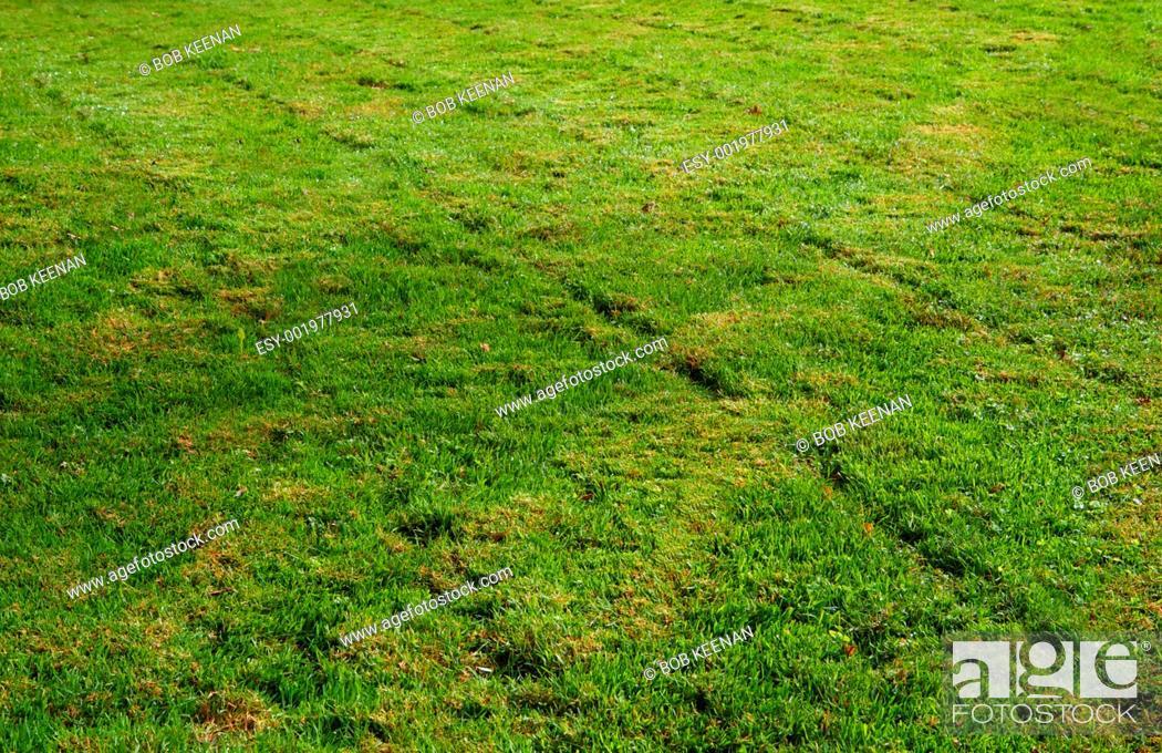 Stock Photo: Freshly mowed grass transverse.