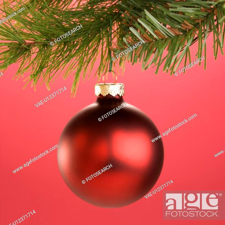 Stock Photo: Still life of round red Christmas ornament hanging from pine branch.