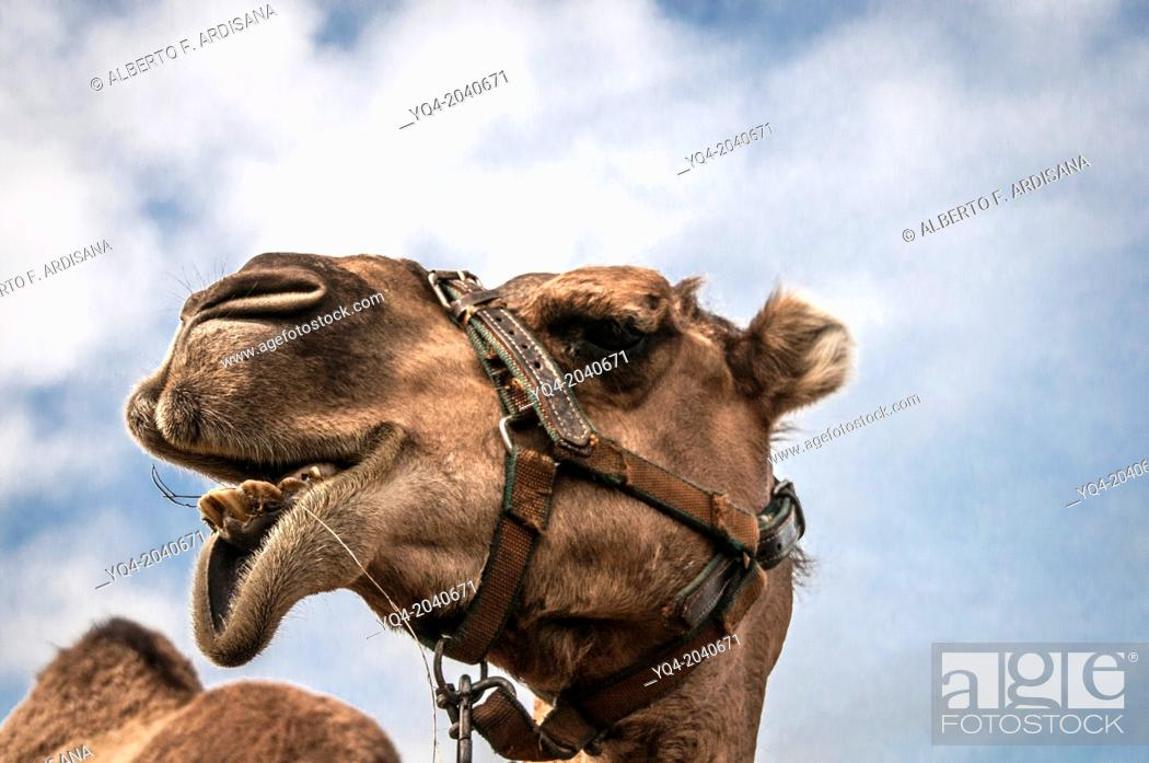 Stock Photo: Portrait of a camel on a background of blue sky with clouds.