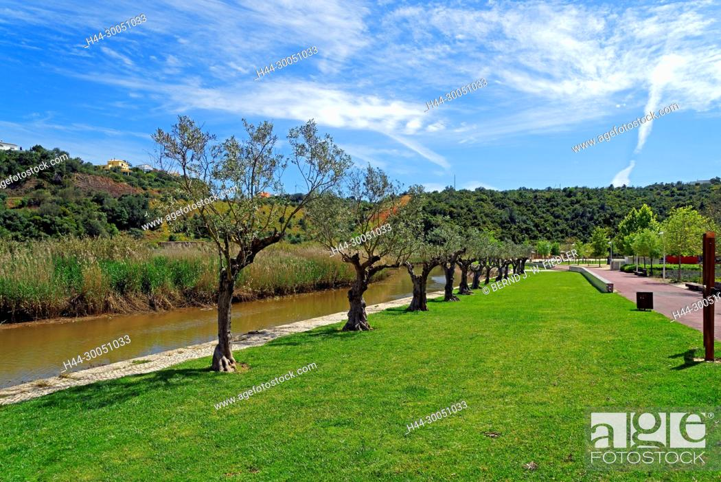 Stock Photo: Scenery, river, Arade, to olive tree, Silves Portugal,.