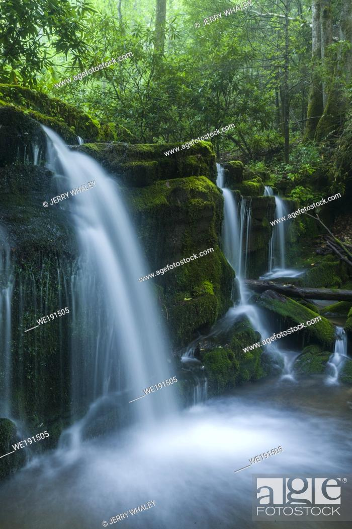 Imagen: Stream & Waterfalls in Greenbrier in Great Smoky Mountains National Park, TN.