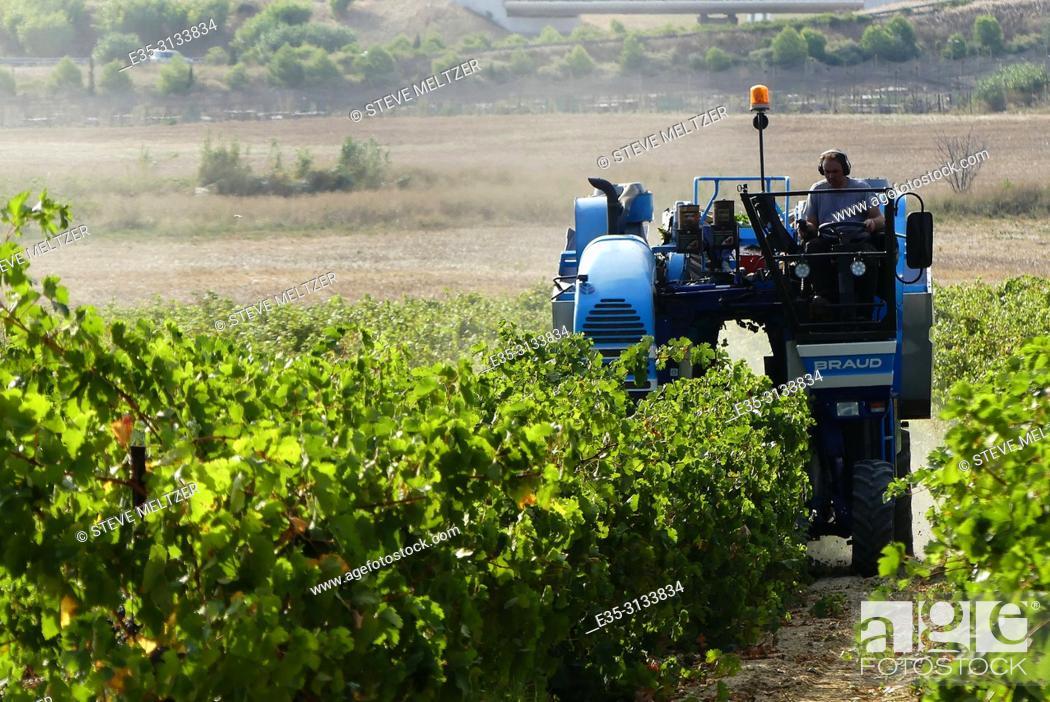 Imagen: Harvesting wine grapes - la vendage - with a modern mechanical harvester. Tourbes, France.