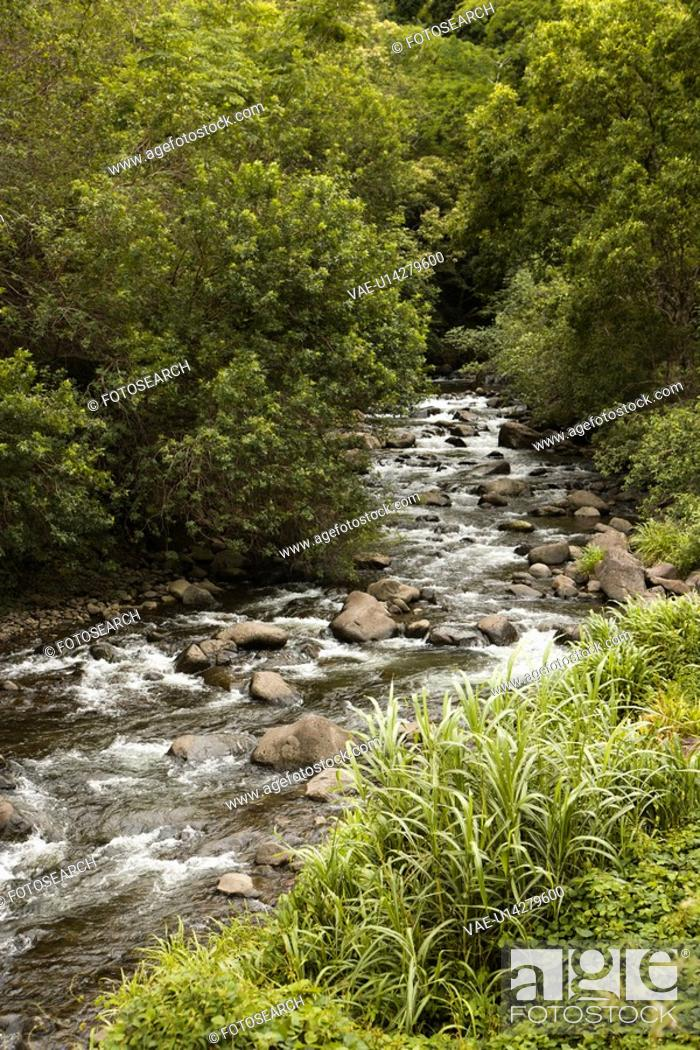 Stock Photo: Rocky flowing creek with green trees in Maui, Hawaii.