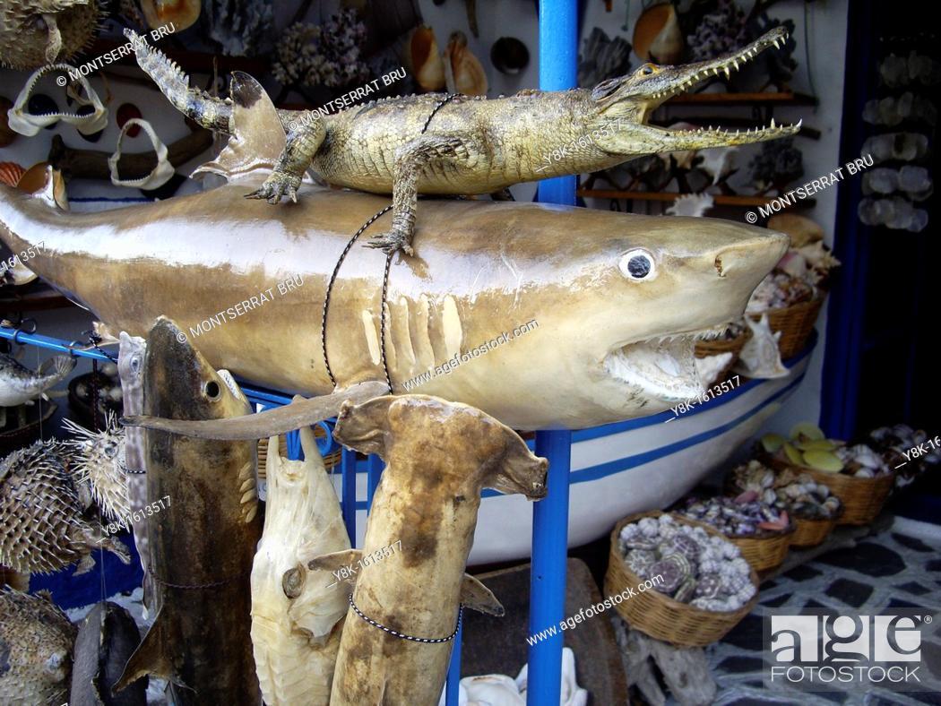 Stock Photo: Taxidermy stall in Rethymno, Crete.