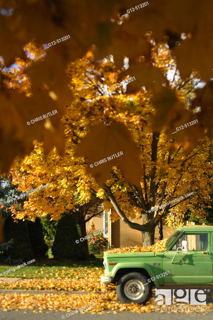 Stock Photo: Green truck parked on street with trees in fall season.