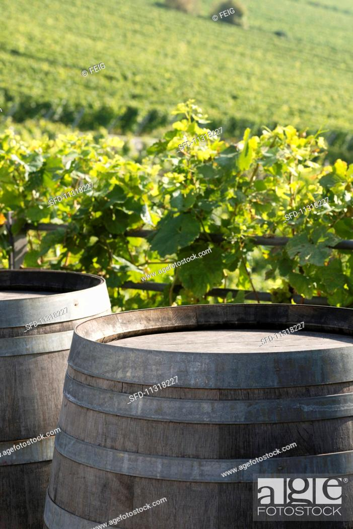 Stock Photo: Barrels of wine with a vineyard in the background.