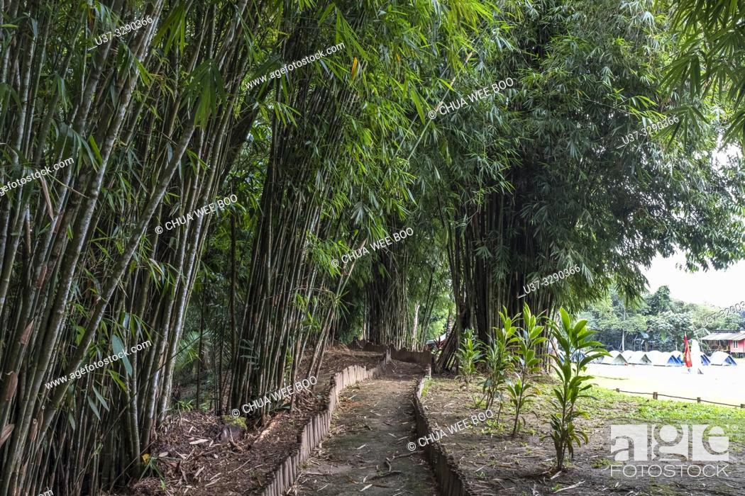 Stock Photo: Bamboo garden at Sumiran Eco-Camp, Kuching City, Batu Kawa, Rantau Panjang, Sarawak, Malaysia.