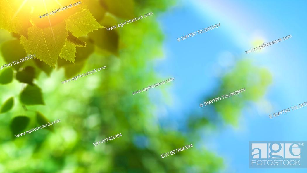 Stock Photo: Abstract spring and summer natural backgrounds.