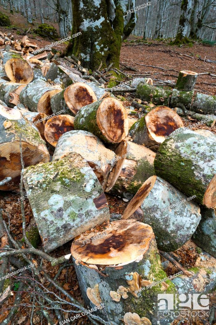 Stock Photo: Beech forest, Urbasa Natural Park, Navarra, Spain, Europe.