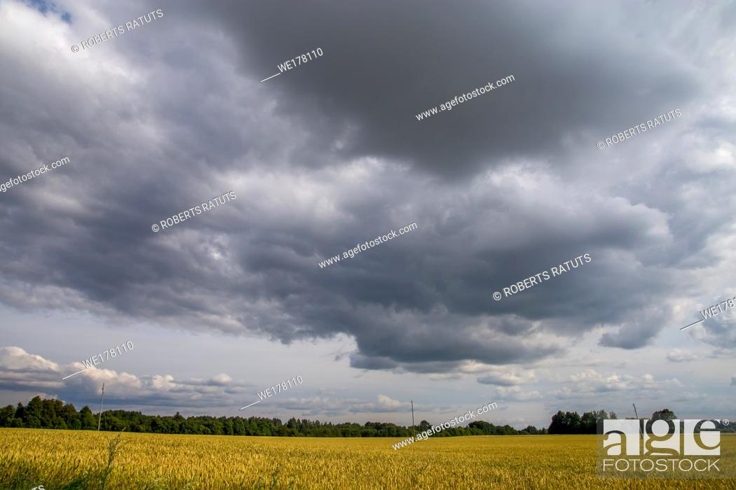 Stock Photo: Field with cereal and forest on the back, against a blue sky. Summer landscape with cereal field and cloudy blue sky. Classic rural landscape in Latvia.