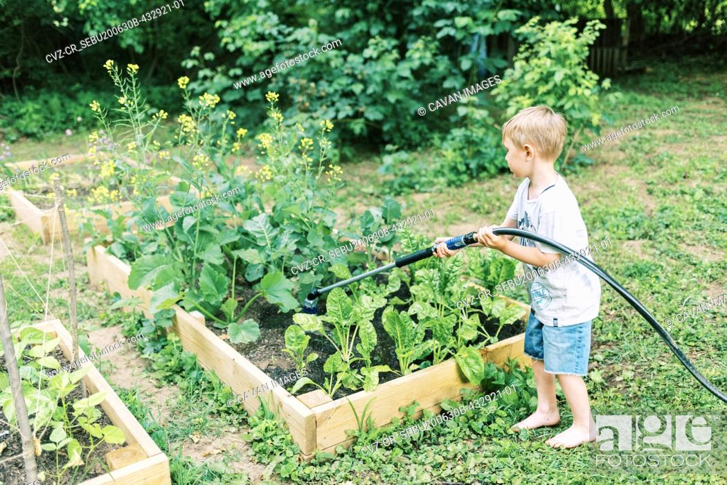 Stock Photo: A little boy doing his chore of watering the vegetable gardens.