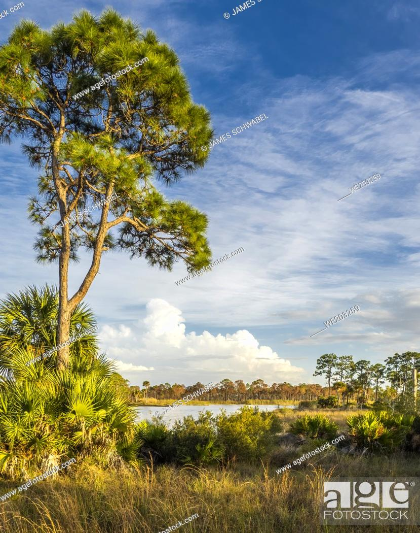 Imagen: Webb Lake in Fred C. Babcock/Cecil M. Webb Wildlife Management Area in Punta Gorda Florida USA.