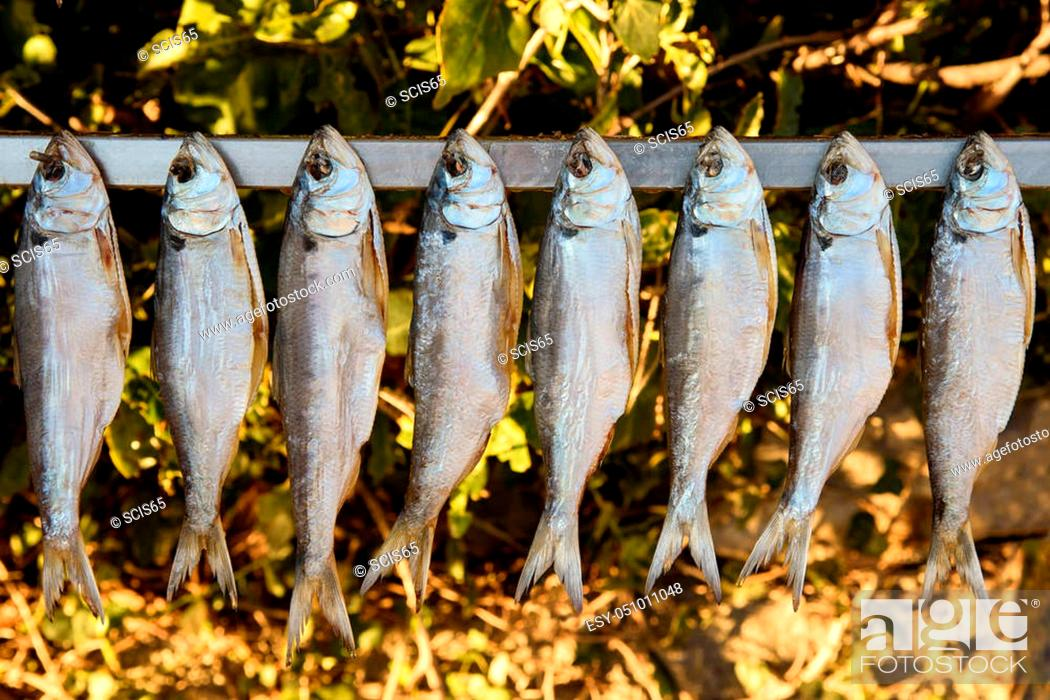 Imagen: shad exposed to the sun to dry.
