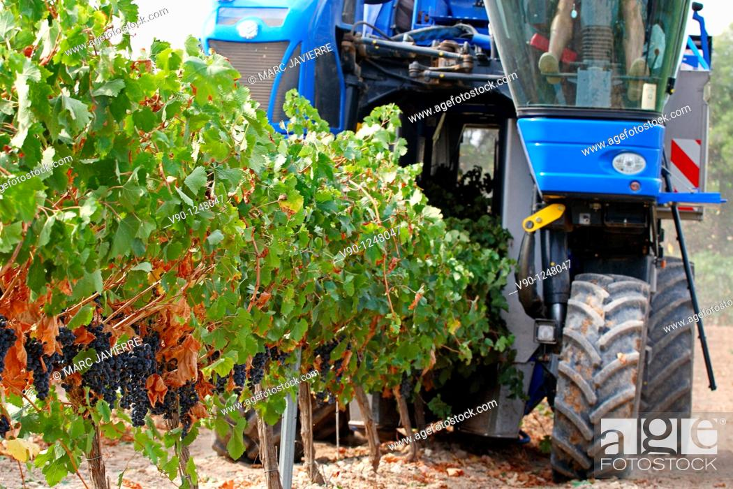 Stock Photo: Grape tractor, El Penedés, Catalonia, Spain.