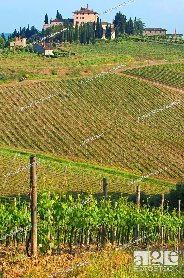 Stock Photo: Vineyards, Radda in Chianti, Chianti, Tuscany landscape, Siena Province, Tuscany, Italy.