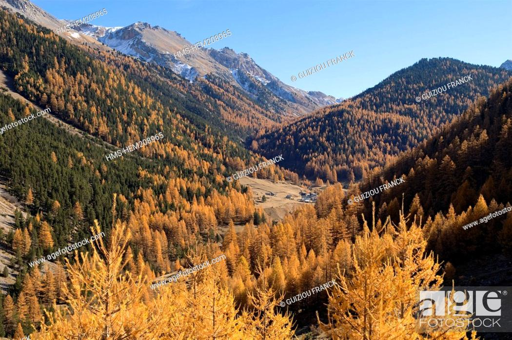 Stock Photo: France, Hautes Alpes, the Brianconnais area in autumn, Vallon des Ayes.