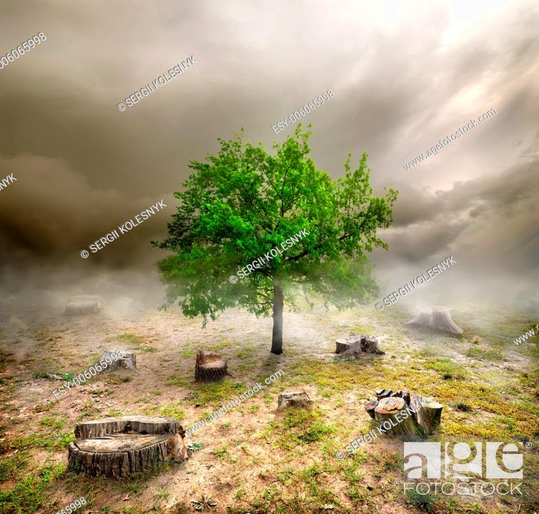 Stock Photo: Green tree among the stumps in cloudy day.