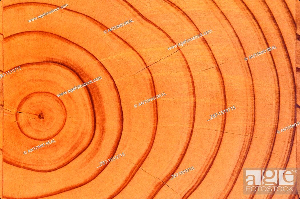 Stock Photo: Tree growth rings.