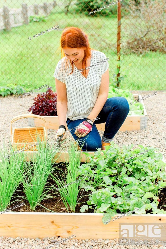 Stock Photo: Woman working in garden.