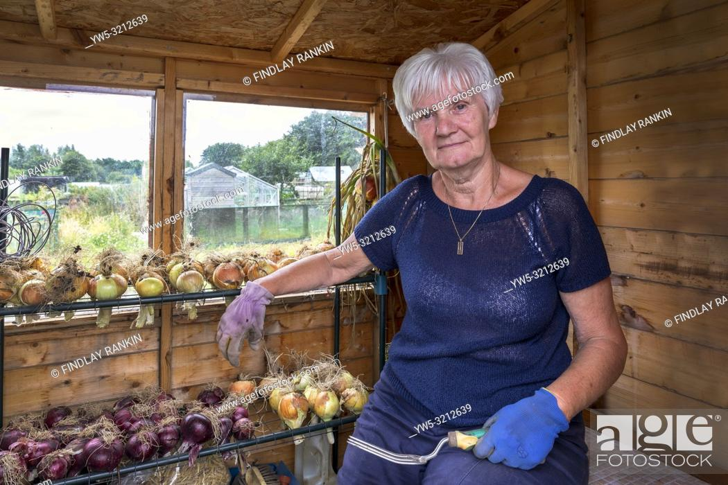 Stock Photo: Marion McMahon, Plot 24, Eglinton Growers Allotments, Kilwinning, Ayrshire, Scotland, UK.
