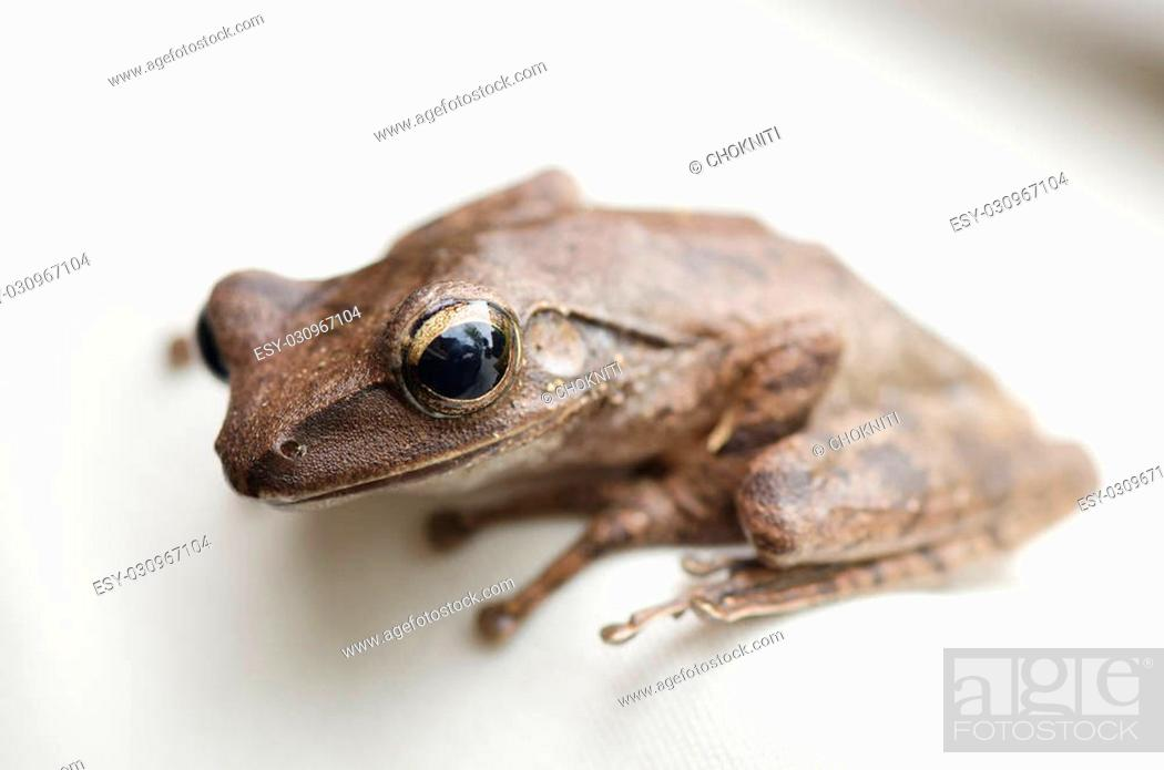 Stock Photo: tree frog.