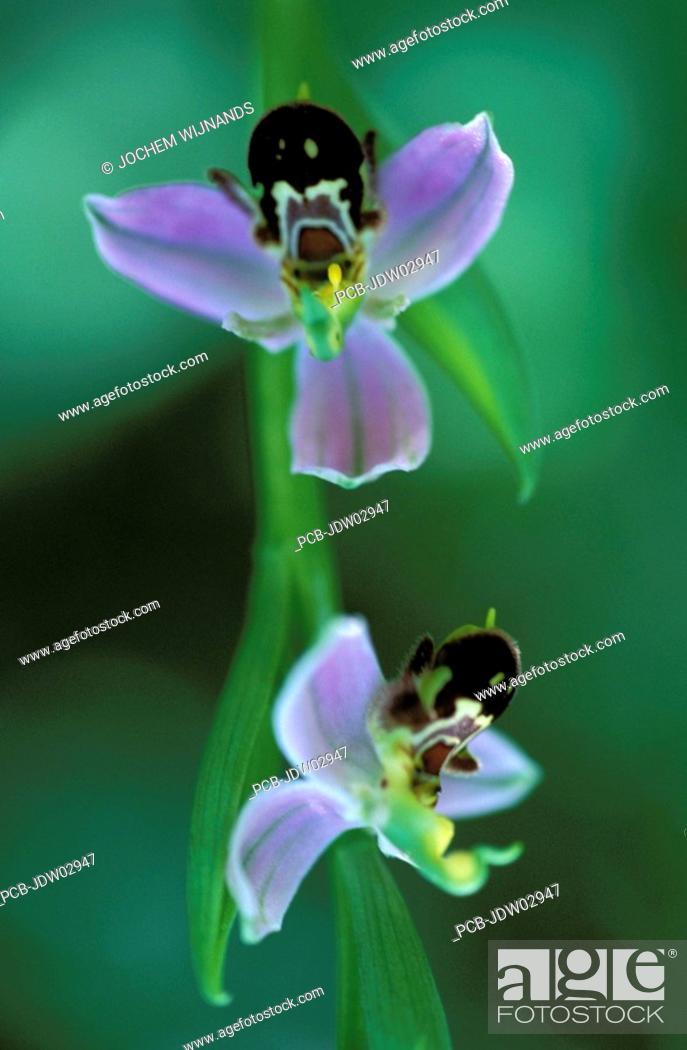 Stock Photo: sierra de grazalema nature reserve.