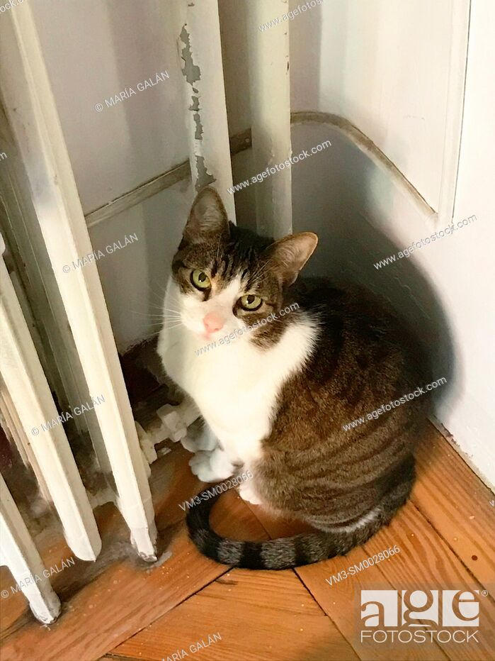 Stock Photo: Cat sitting by the heater, looking at the camera.