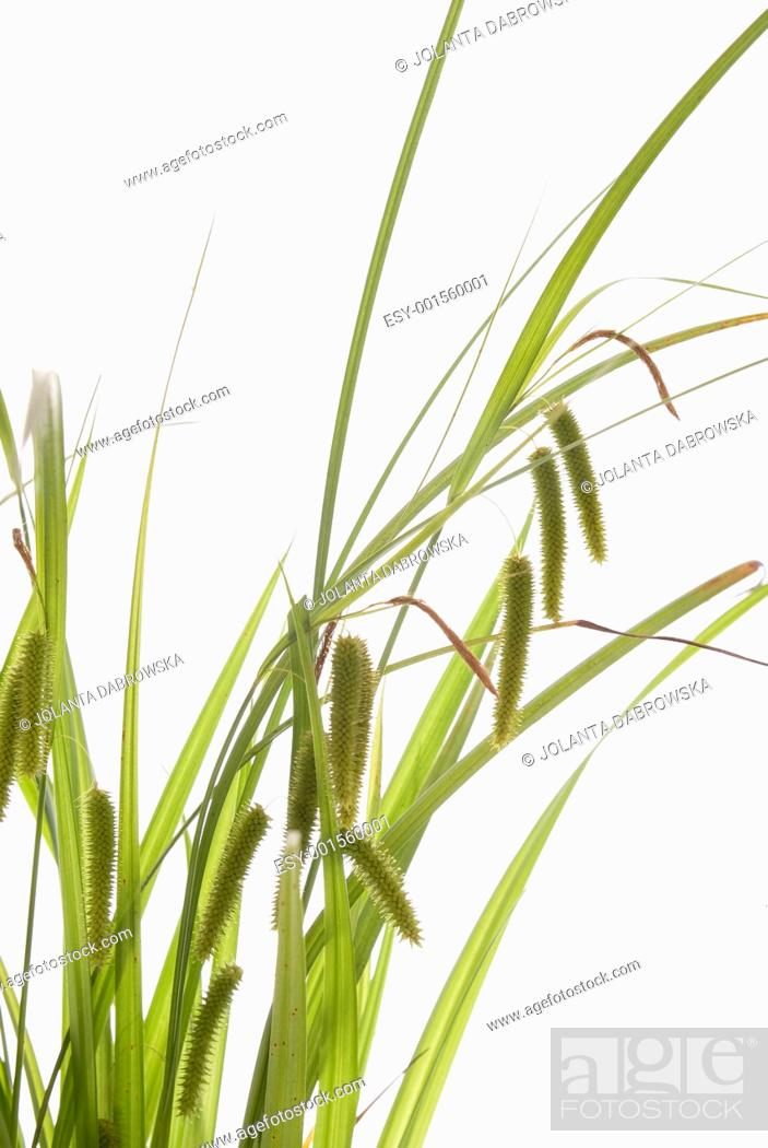 Stock Photo: grass.