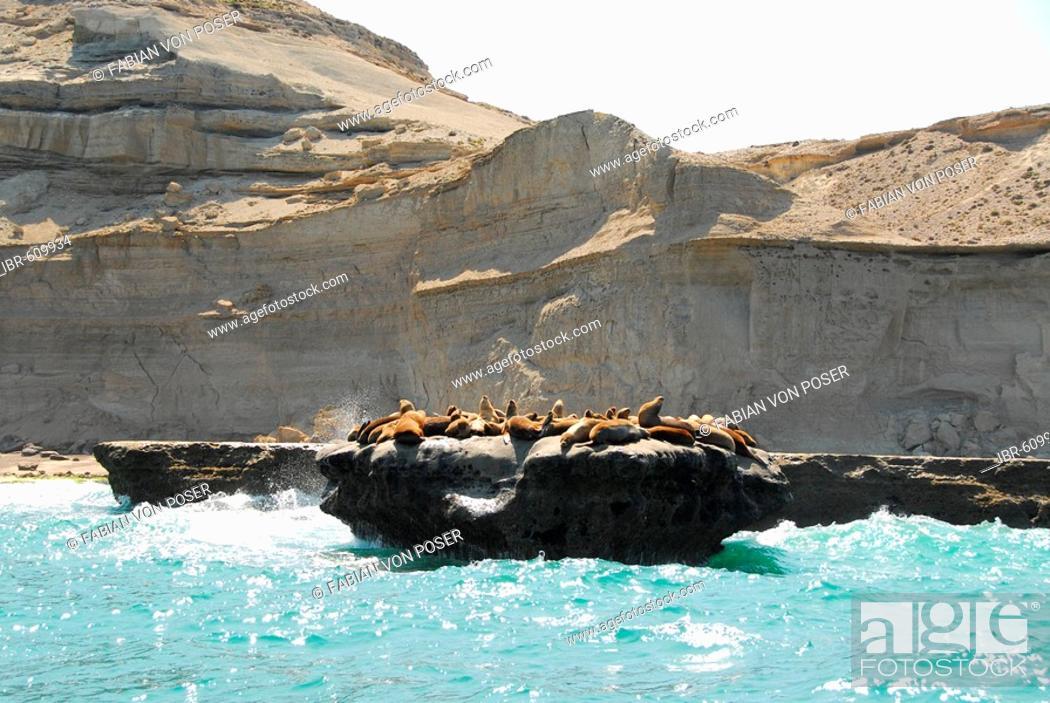 Imagen: Sea lion colony near Puerto Pirámides, Península Valdés, Chubut Province, Patagonia, Argentina.