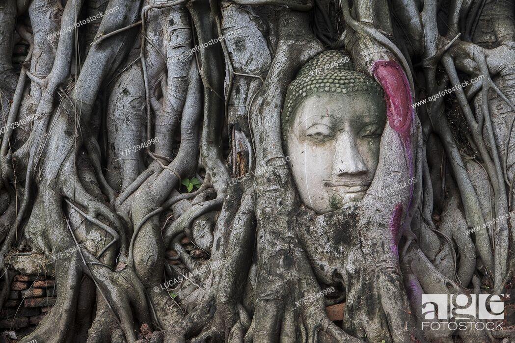 Photo de stock: Buddha head in banyan tree roots at Wat Mahathat temple, in Ayutthaya, Thailand.