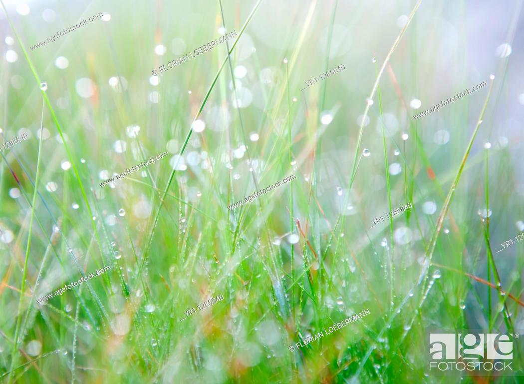Stock Photo: Makro shot of grass with early morning dew. Shallow DOF.