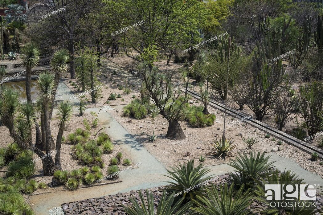 Imagen: Museum of Cultures of Oaxaca, former Santo Domingo de Guzman convent, Botanical garden, Oaxaca, Mexico.