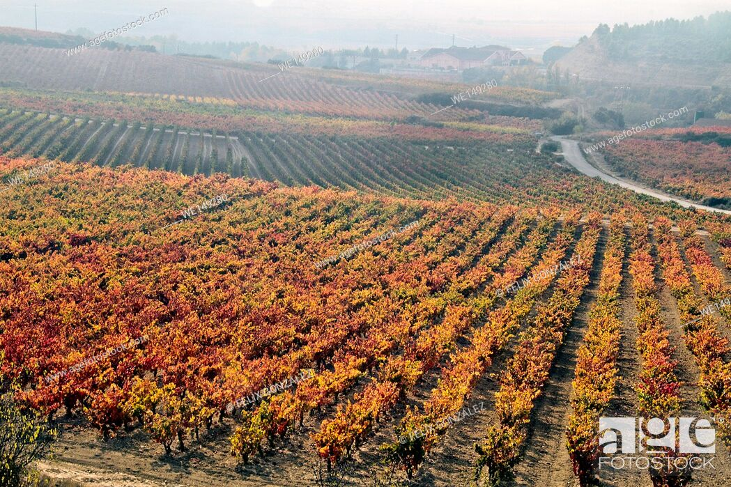 Stock Photo: Vineyard Panoramic views, LaGuardia, La Rioja, Basque Country, Spain.