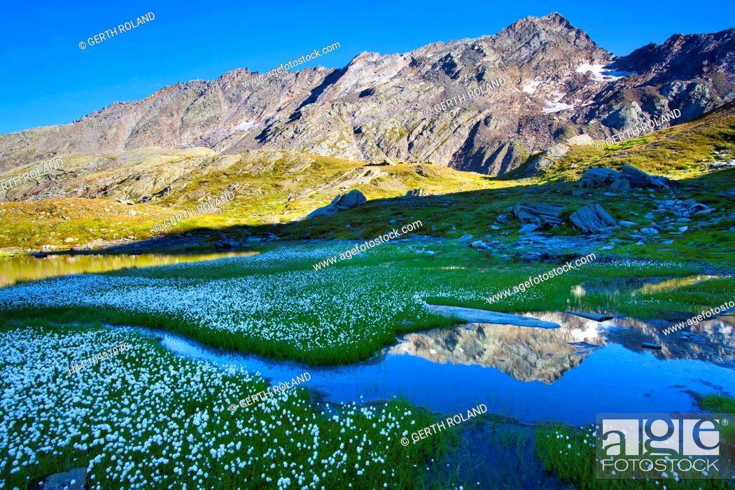 Stock Photo: Laghetti Laiozz, Switzerland, Europe, canton, Ticino, Val del Coro, marsh scenery, scenery, cotton grass, blossom, cotton grass,.