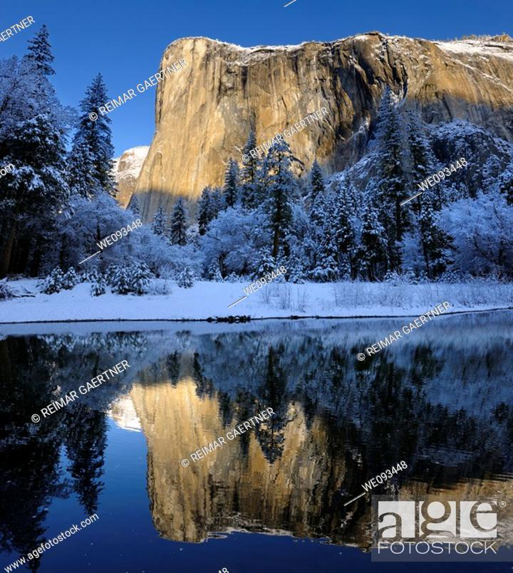 Stock Photo: Morning light on El Capitan in winter reflected in the Merced River with snow covered trees in Yosemite Valley.
