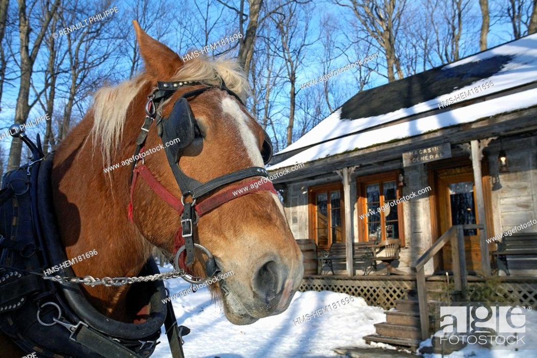 Stock Photo: Canada, Quebec Province, Monteregie Region, Rigaud, La Sucrerie de la Montagne sugar hut, horse in front of the general store.