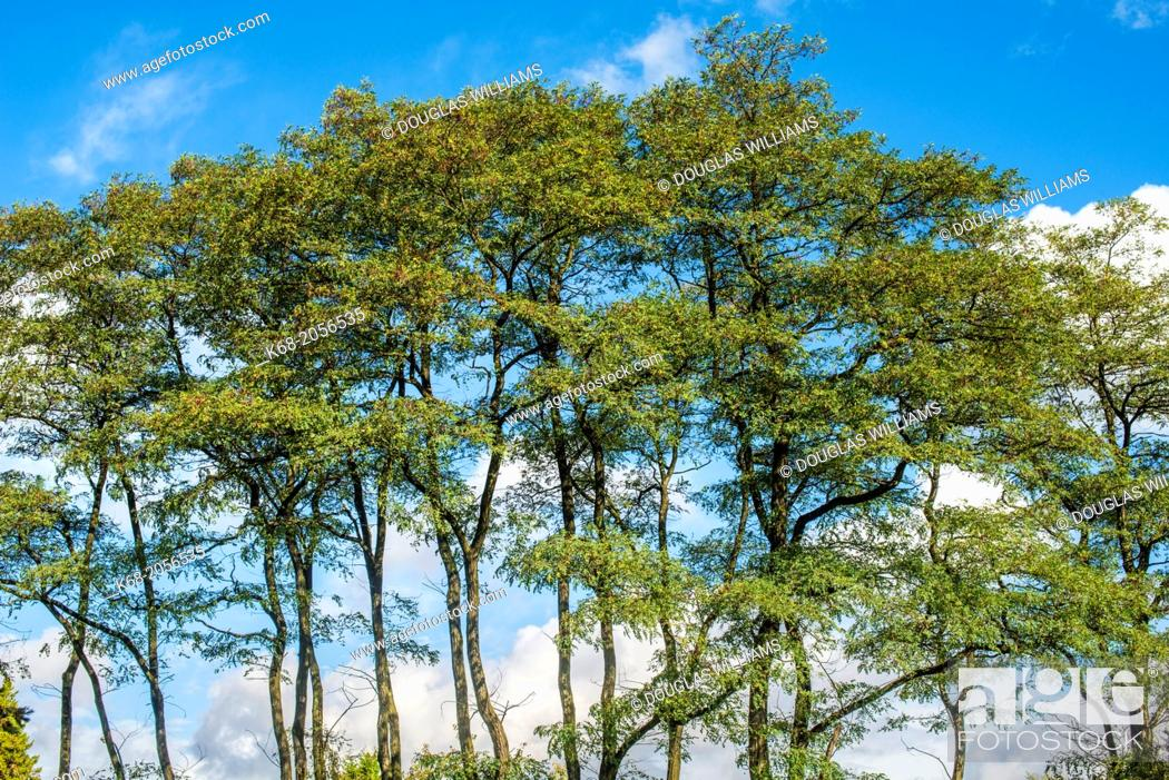 Stock Photo: trees at the campus of Langara College, Vancouver, BC, Canada.