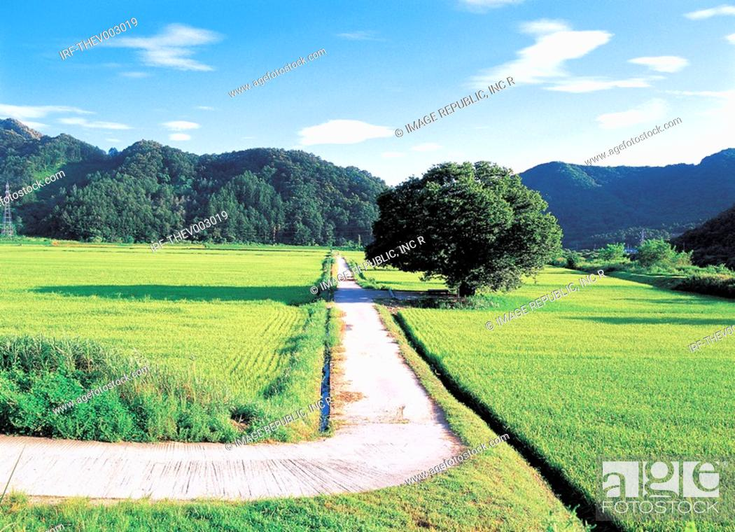 Stock Photo: field and road.
