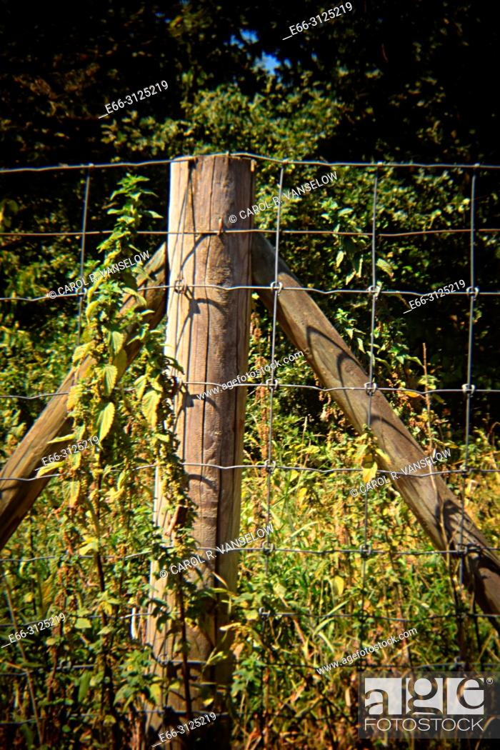 Stock Photo: Chain link fence with flowers growing on it, in Heerlen in the province of Limburg in the Netherlands. Shot with Holga lens for selective focus.