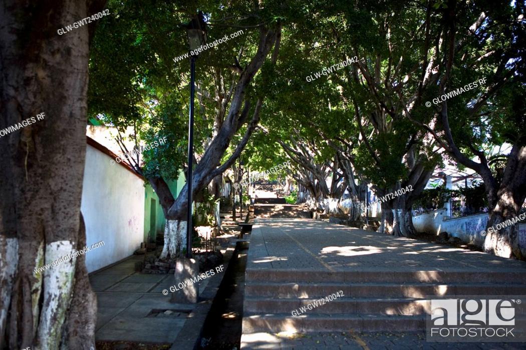 Stock Photo: Trees along a path, Cerro Del Fortin, Oaxaca, Oaxaca State, Mexico.