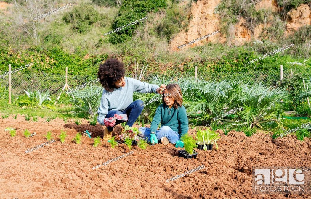 Stock Photo: Mother and son planting lettuce seedlings in vegetable garden.