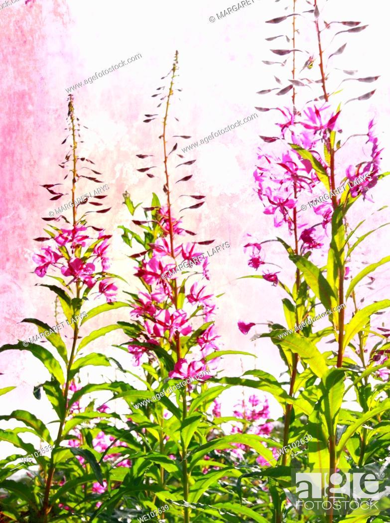 Stock Photo: Wild purple flowers.