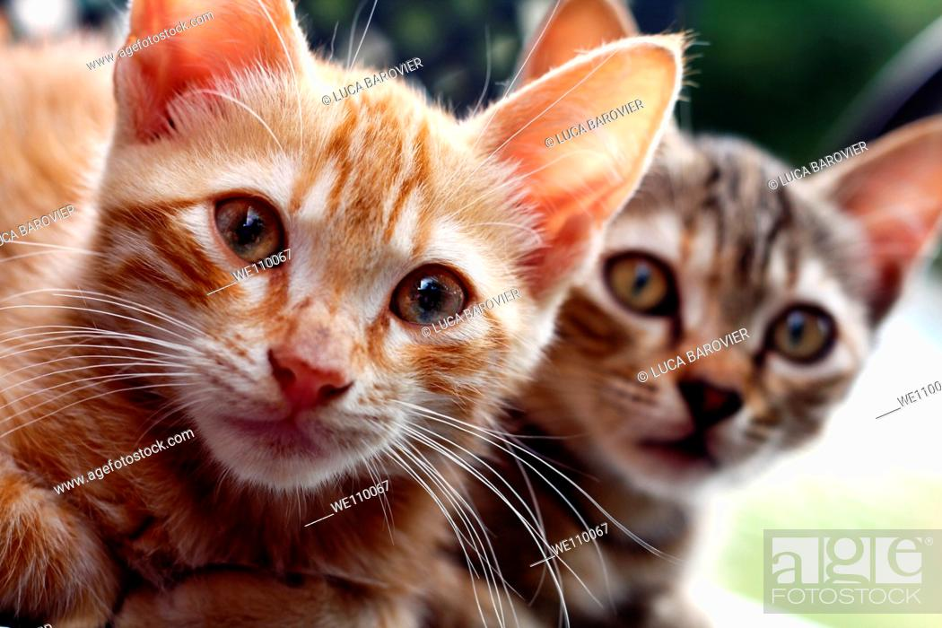 Stock Photo: Two kittens brothers.