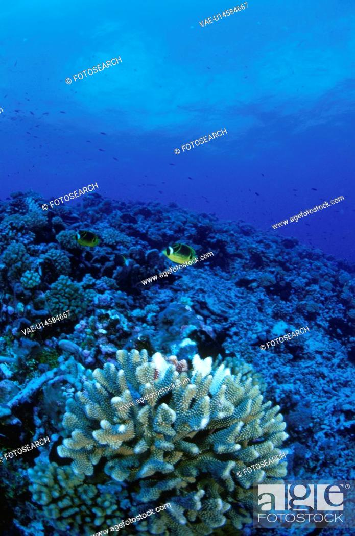 Stock Photo: The Blue Sea And Coral.