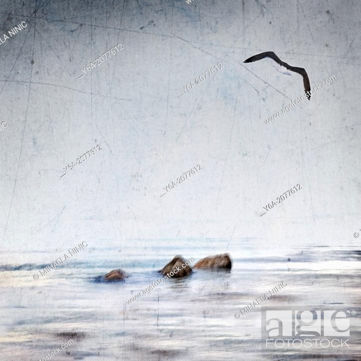 Imagen: Seagull flying over ocean.