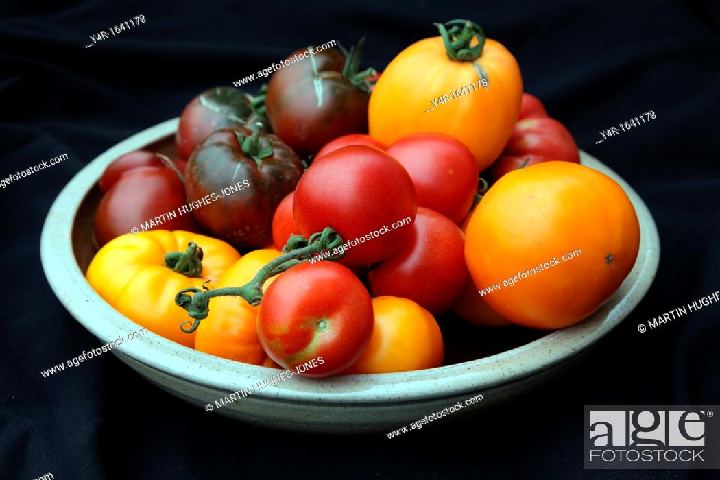 Stock Photo: Heritage tomatoes in a pottery bowl -'Russian Persimmon', 'Coeur de Boeuf' or 'Beefheart' orange form, 'Alicante', 'Omar's Lebanese' - pink and 'Paul Robeson' -.
