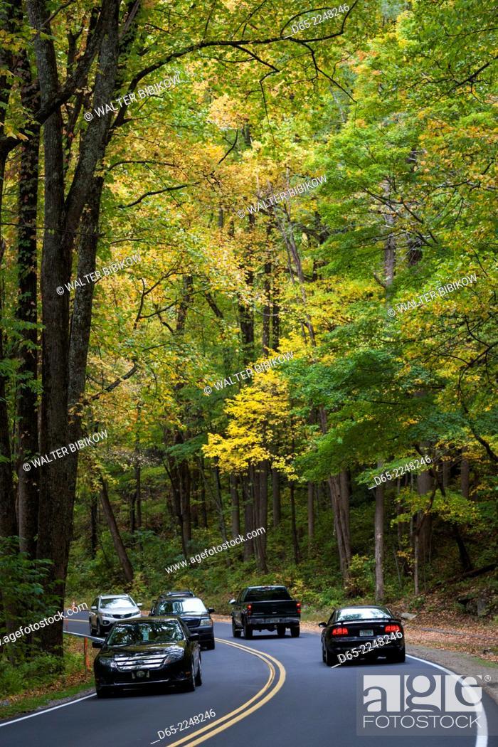 Stock Photo: USA, North Carolina, Great Smoky Mountains National Park, Newfound Gap Road, Route 441, autumn.