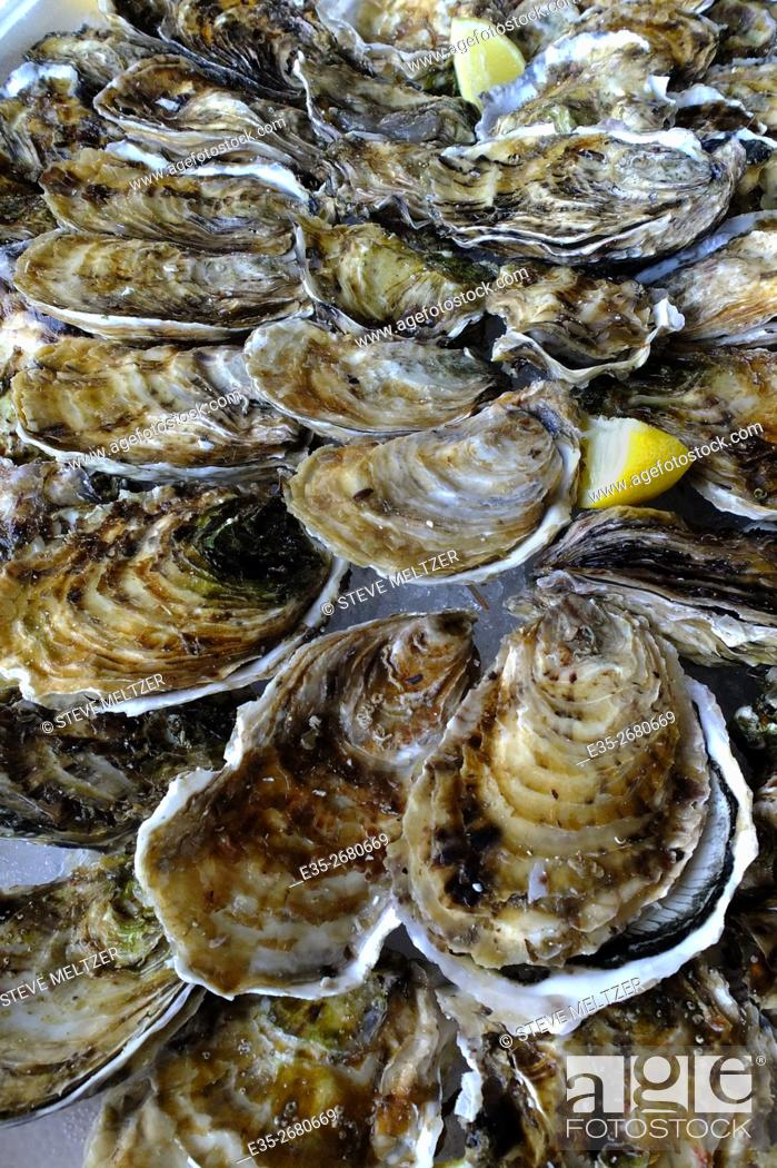 Stock Photo: Fresh oysters ready to be eaten, Bassin de Thau, Languedoc-Roussillon, France.