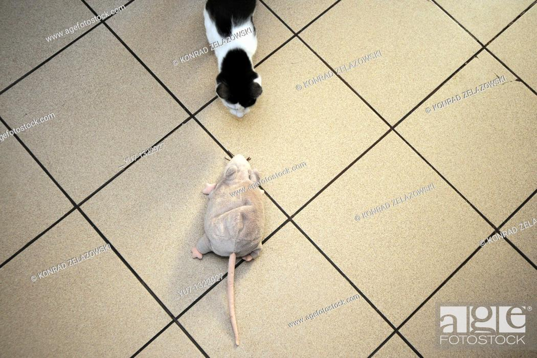 Stock Photo: Young cat hunting for a plush rat.