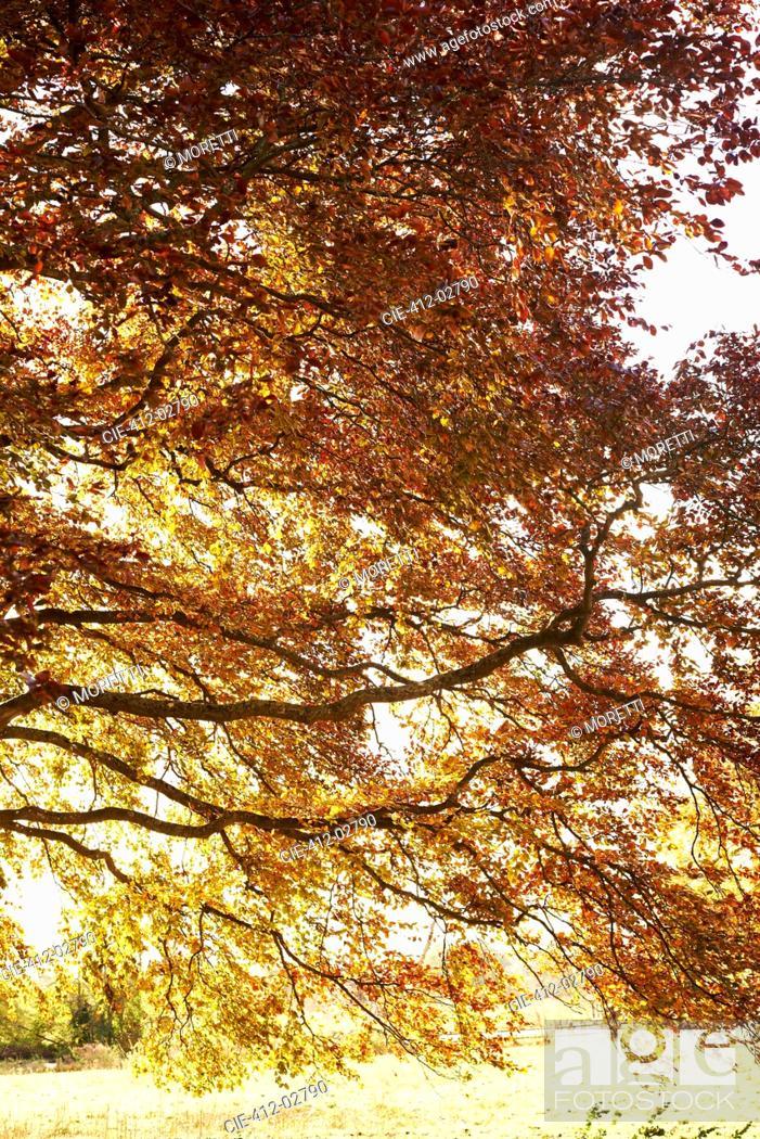 Stock Photo: Autumn leaves on tree.